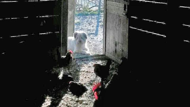 perro casa rural