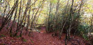 Camino desde Saragueta